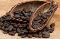 El cacao en forma de frijol. ¡Que amargo me supo el que me dio de probar Maite!