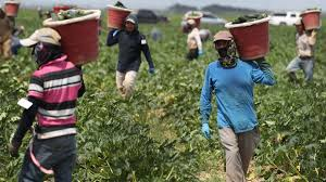Farmworkers are facing their own coronavirus crisis - CNN
